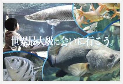 雨の日でも楽しめる場所!東海(静岡・愛知etc)の人気スポット10選アクア・トトぎふ