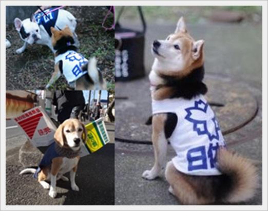 箱根駅伝名物!面白い応援まとめ!フリーザやリラックマに犬まで、3