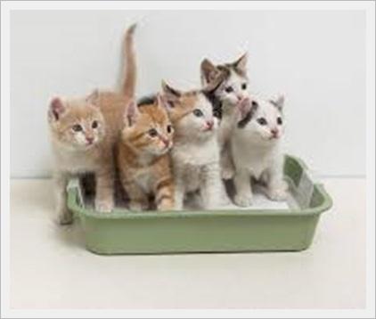 猫(多頭飼い)の餌のやり方!ダイエット用の餌の分ける方法と餌代も1