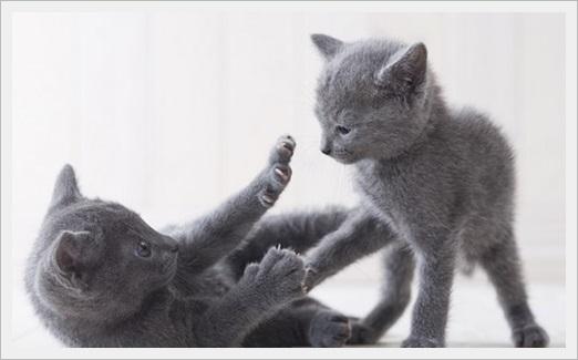 猫(多頭飼い)の餌のやり方!ダイエット用の餌の分ける方法と餌代も4
