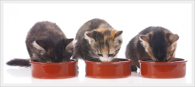 猫(多頭飼い)の餌のやり方!ダイエット用の餌の分ける方法と餌代も5