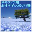 ネモフィラ畑のおすすめスポット7選!関東・関西別に見頃時期も1
